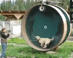 Hamster wheel for dogs…