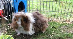 Runaround: Rabbit and Guinea Pig Runs