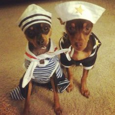 I had to repin, we have a min pin named Jasmine, silly dogs!