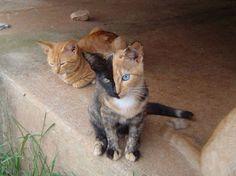 Pretty Kitty!: Chimera Cat Is Its Own Fraternal Twin | Geekologie