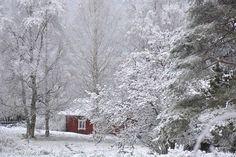 Niin kaunis on hiljaisuus... Pohjois-Karjala. 01.11.2016 Photo Maija Savolainen