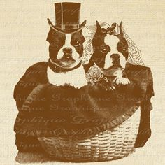 Boston Terrier Puppy Bride and Groom Wedding Dog Digital Image Download Transfer To Pillows Tote Tea Towels Burlap No. 2493 SEPIA