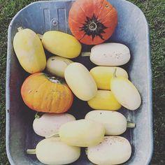 the harvest at lepavillondelorangerie Harvest, Photos, Pumpkin, Vegetables, Instagram, Food, Pavilion, Pictures, Pumpkins