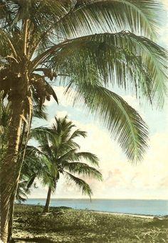 Mombasa Palm Trees 1960s