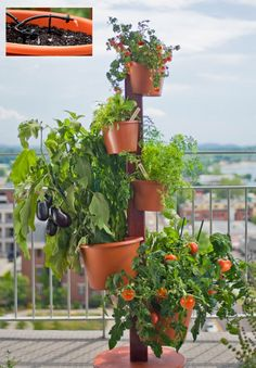Vertical Garden System w/ Drip Irrigation Included Vertical Garden Systems, Vertical Vegetable Gardens, Indoor Vegetable Gardening, Tower Garden, Fruit Seeds, Tree Seeds, Drip Irrigation, Plant Wall, Agriculture