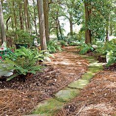 Inspiring North Carolina Garden: Shade Garden