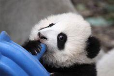 Chengdu, Sichuan, China -