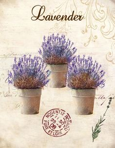 Obraz na plátně-lavender - zvětšit obrázek #lavender