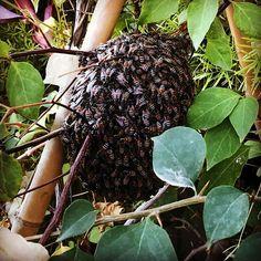 #MyDubai #dubaiart #dubai #fadiradi #summer_time #gardenlove #gardenmagic #gardendesign #diygarden #diygardendesign #Mudon_Villas #Mudon #dp #dubaistyle #bees #beehive #dubaibees #dubaibees #beeslove #beesloveme