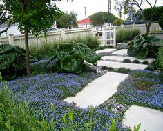 Grey Lynn Garden Design, front garden Auckland, Garden Inspiration, Garden Ideas, Landscape Architecture Design, Front Fence, Small Garden Design, Garden Photos, Cool Landscapes, Pathways