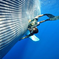 Bucket List : Dive With Whales in The Kingdom of Tonga