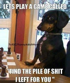 Animals are the best entertainment in the World, which make us laugh anytime, anywhere! Just look ridiculous animal picdump of the day 43 if you love funny animals. So ridiculous, funny and cute 32 funny animal pics! Dachshund Funny, Dachshund Quotes, Dog Quotes Funny, Funny Animal Jokes, Dachshund Puppies, Funny Animal Pictures, Cute Funny Animals, Animal Memes, Cute Baby Animals