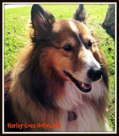 HARLEY SAYS: Remember all you need is love...and a dog.
