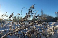 Entdeckungen im Winter   Der Schnee verzaubert die Vegetation aus dem Herbst (c) Frank Koebsch (4) #Winter #Schnee #Mecklenburg-Vorpommern