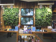 vertical garden green wall