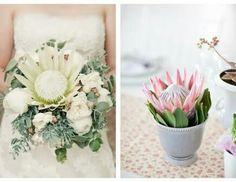 White king protea and sage wedding bouquet Protea Centerpiece, Centerpiece Decorations, Wedding Centerpieces, Wedding Bouquets, Wedding Flowers, Centrepieces, King Protea, Protea Flower, Sage Wedding