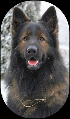 GSD                                                                                                                                                                                 More