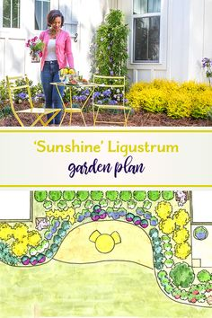 Shine Brightly with Sunshine Ligustrum Spring Landscape, Landscape Design, Garden Design, Southern Landscaping, Front Yard Landscaping, Sunshine Ligustrum, Spring Garden, Big Garden, Perfect Plants