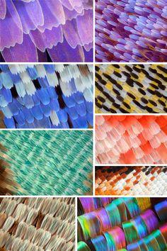 hunt+gather studio blog - butterfly wings by Rachel Clore