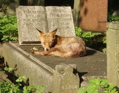XX Not all angels are made of stone. Highgate cemetery