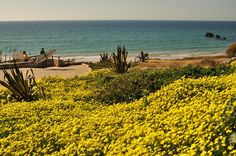 The vegetation at the beach of El Palmar