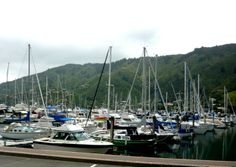 On my walk to Waikawa I had expected a dead end or a walk round the peninsular and back to Picton - not 100s of boats!