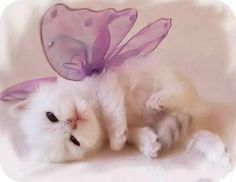 Cute kittens - pictures - wondrous pics, Cats or kittens are world's most favorite pets and people love their fluffy and silky fur and their playing antics. Cute Kittens, Cute Kitten Pics, Kitten Images, Tiny Kitten, I Love Cats, Crazy Cats, Animal Pictures, Cute Pictures, Baby Animals