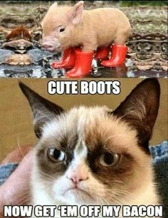 Wrong but funny. Oh grumpy cat how I loath you and love you lol