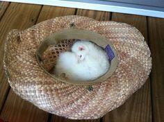 Ruby taking a Siesta in my favorite hat.
