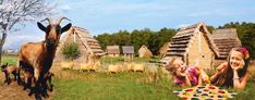 Czech Republic, Horses, Adventure, Park, Summer, Travel, Animals, Summer Time, Viajes