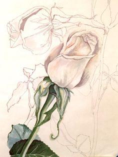 Original Drawing of White Roses, botanical study, graphic roses, floral artwork, modern decor feminine decor, nature art, wall art by MarissaGrana on Etsy