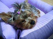 Resultado de imagem para hacer camas para perros