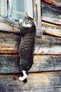 Cat & Window Cat Window, Windows, Cats, Gatos, Kitty Cats, Window, Cat, Kitty, Cats And Kittens