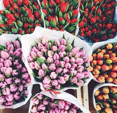 Tulips are the greatest