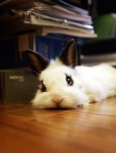 bunny looking at you. Click photo to see many more adorable bunnies. Funny Rabbit, Funny Bunnies, Cute Bunny, Bunny Bunny, Funny Pets, Adorable Bunnies, Bunny Care, Baby Bunnies, Baby Animals