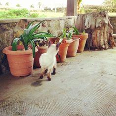 Qué buscará Ernestín? #cat