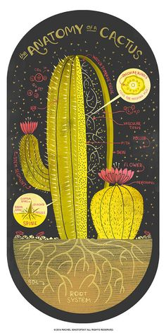 #Infographics. The #Anatomy of a Cactus #art #print by Rachelignotofsky