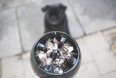 How many times have you been told your pug needs to lose weight? Need some help? Read these tips to help when your pugs needs to lose weight. Cheap Pet Insurance, Dog Insurance, Dog Treat Recipes, Raw Food Recipes, Puppy Care, Pet Care, Cushing Disease, How To Make Biscuits, Pug