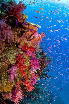 Fish near Fiji, look at that wonderful coral