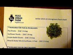 Microgreens fresh sheet for selling to chefs - YouTube