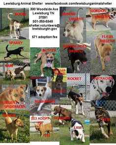 Happy Monday morning everyone!! And here at the Lewisburg Animal Shelter IT IS HAPPY!! A great rescue partner pulled 7 (Swamp Thing, Lee, Desi, Major, Rocket, Boom and Sparky) and Sam was adopted. A huge thank you to Animal Rescue Assistance Team Tennessee for making all the arrangements, getting the necessary funds and transporting all 8 of these super dogs!!! We still have plenty of really great dogs and several are still urgent as they have been with us for a while.