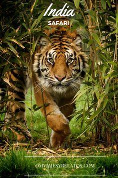 Los escenarios del Libro de la Selva: Datos prácticos para realizar un Safari en el Parque Nacional de Kabini, al Sur de la India.