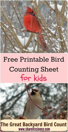 Download This Freebie Printable To Help Your Young Birders Keep Track Of How Many Birds They