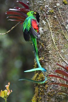 Green Wing, Vertebrates, Beautiful Birds, Airplanes, Bird Feeders, Animals And Pets, Habitats, Nature, Beauty