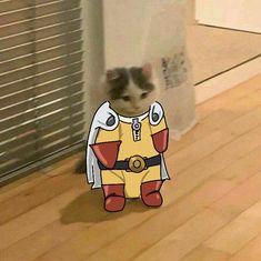 Dark Humour Memes, Cat Memes, Otaku Anime, Anime Naruto, Anime Kitten, Cat Icon, Cat Stands, Cute Cartoon Pictures, Cat Character