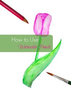 Learning how to use watercolor pencils is a great introduction to watercolors for both kids and adults.