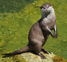 All About Animals, Animals Of The World, Reptiles, Mammals, Baby Otters, Animal Magic, Sea Otter, Kangaroo, Wildlife