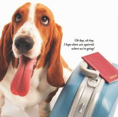 World Travel With Your Pets