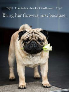 Be a #gentleman #pugs #dogs #retweet #pug #follow #like #puglife #dog #aww #cute #pugsdaily #pets #love #humor #sooocute #retweets