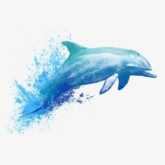 Watercolor dolphin PNG and Clipart Watercolor Fish, Watercolor Images, Watercolor Animals, Watercolor Paintings, Dolphin Painting, Dolphin Art, Orcas, Island Tattoo, Dolphins Tattoo